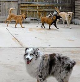 dog-day-care